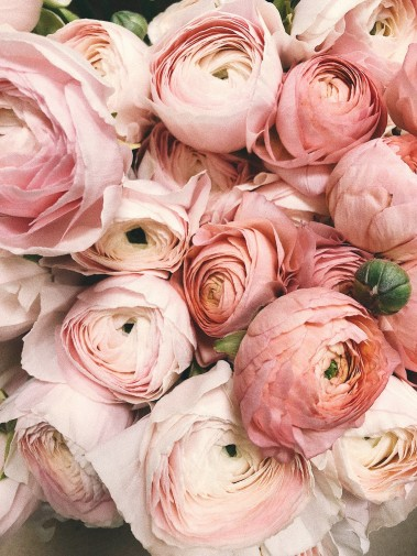 Stems N' Such Flowers & Gifts