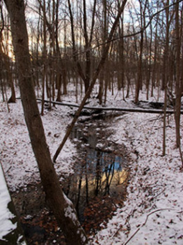 Meadowbrook Conservation Center and Nature Preserve